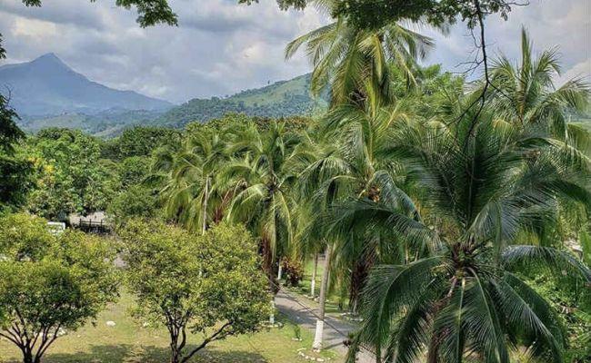 Vista casa del árbol